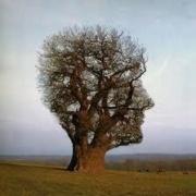 Ecologia Umana e Mindfulness